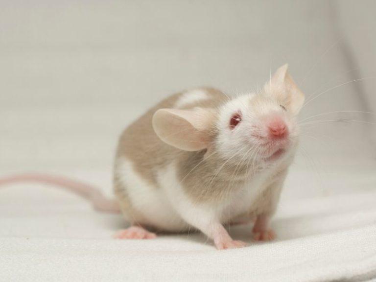 Do mice usually go upstairs?
